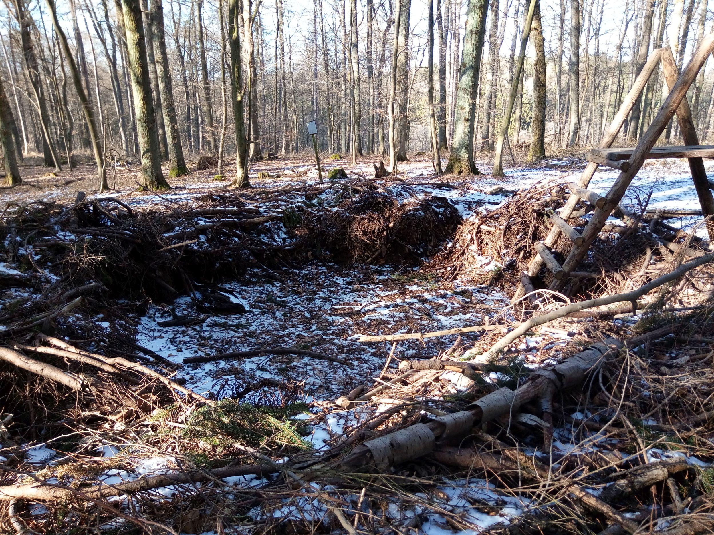 Riesenvogelnest im Wald bei Höhr-Grenzhausen